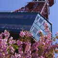 塔麓 春盛り