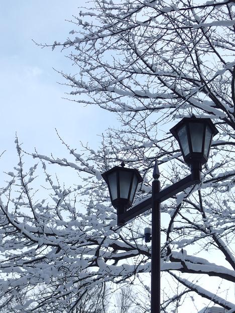 雪の季節へ
