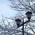 Photos: 雪の季節へ
