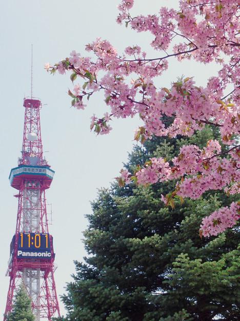 桜とテレビ塔