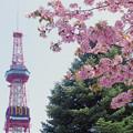 Photos: 桜とテレビ塔