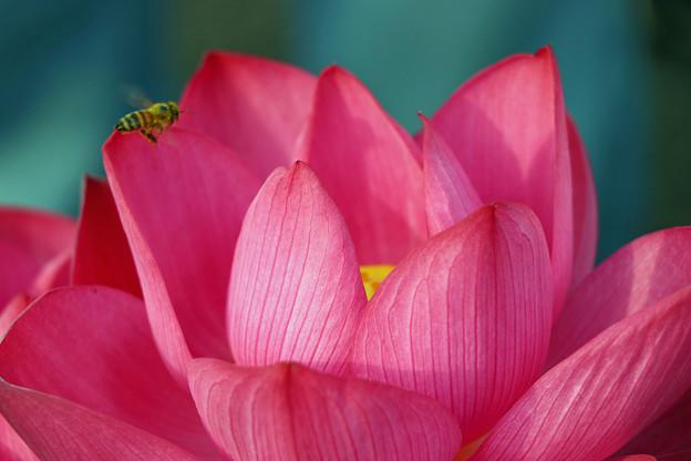艶陽天と蜂