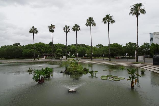 咲くやこの花館前の池