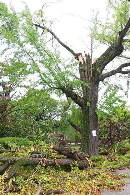 生物季節観測標本