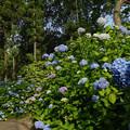 Photos: 花の谷