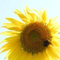 Photos: クマバチと太陽