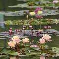 Photos: 咲くやこの花館前 池