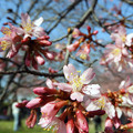 Photos: よく咲いてます