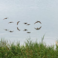 Photos: 小鳥飛翔