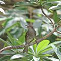 Photos: 迷い鳥