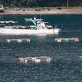 漁船と生簀