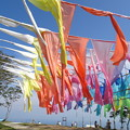 Photos: 虹のカーテン
