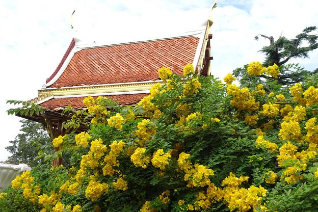 タイランド庭園の花