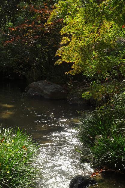 小鳥の水場