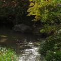 Photos: 小鳥の水場