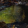 Photos: 水面の黄葉