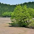 新緑のコケ沼2