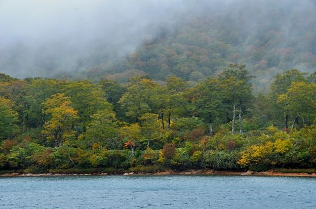 霧と雨の紅葉