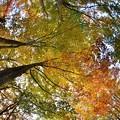 ブナ林~紅葉