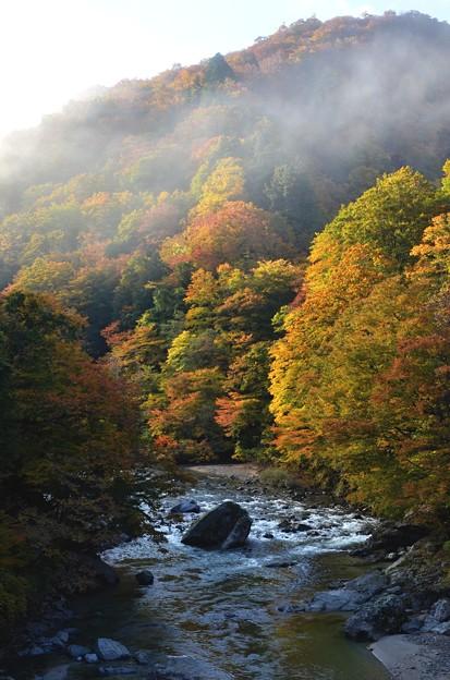 渓谷の朝靄