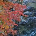 Photos: 渓谷の紅葉