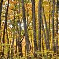 Photos: ブナの木