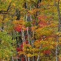 Photos: 赤と黄~紅葉