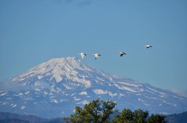 鳥海山~白鳥