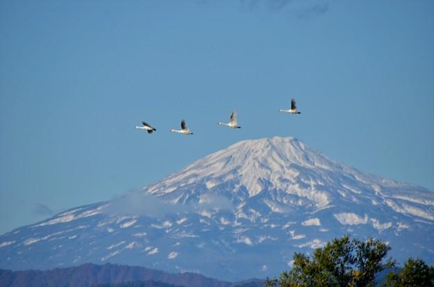 鳥海山~白鳥2