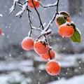 残り柿~雪