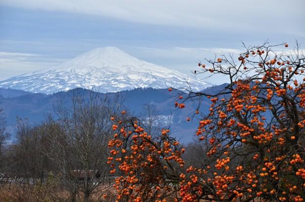 残り柿と鳥海山