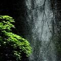 Photos: 滝です
