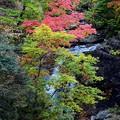 Photos: 少し紅葉滝上段