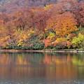 Photos: 水辺にて