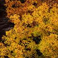 黄葉~サイズ縮小