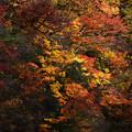 Photos: 紅葉~光と影~縮小