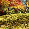 イチョウ~落ち葉~サイズ縮小