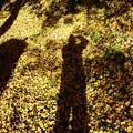 Photos: イチョウと紅葉と影