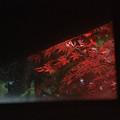 窓の紅葉2