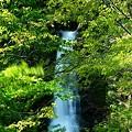 Photos: 葉っぱも揺れて~仙人の滝2