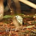 Photos: キクちゃんの水浴びー1