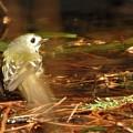 Photos: キクちゃんの水浴びー3