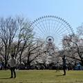 写真: お花見ー3