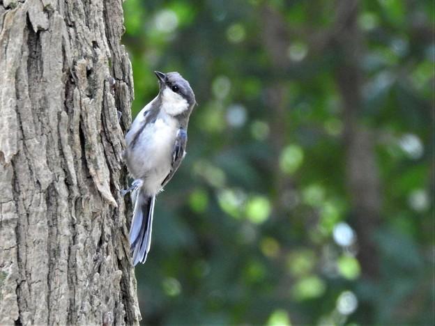 可愛い幼鳥1