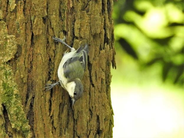 写真: 可愛い幼鳥3