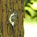 可愛い幼鳥3