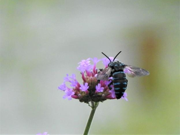 幸せを呼ぶ青い蜂4