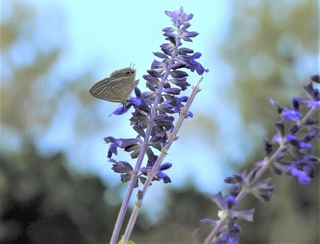 Photos: 花に蝶