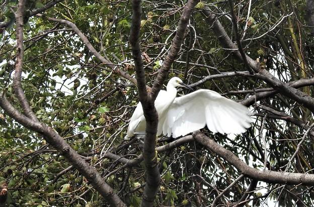 写真: 高い木の上で~