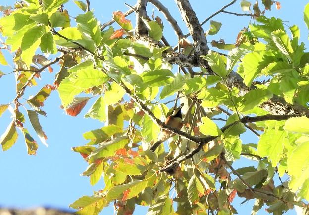 高い木の中~